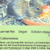 _DSC8654_klein